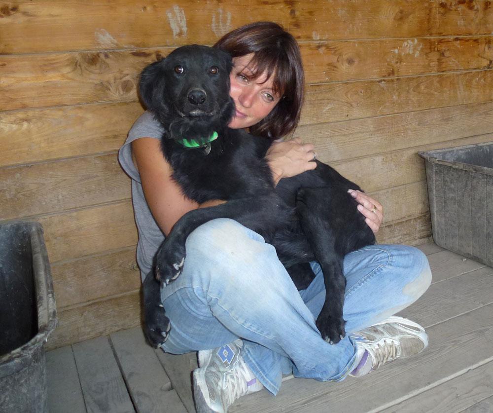border collie chien adoption refuge hautes alpes gap veynes paca