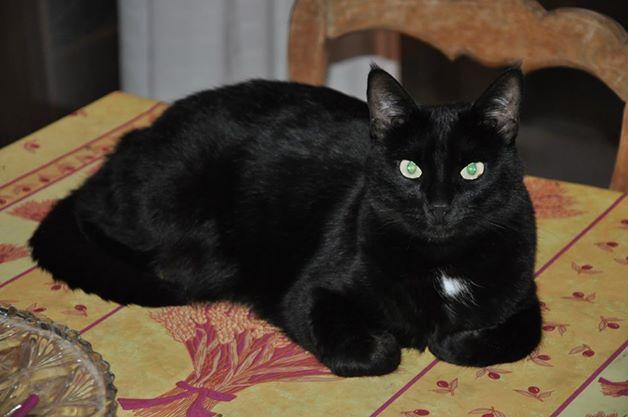 toutes les photos de chatte noire