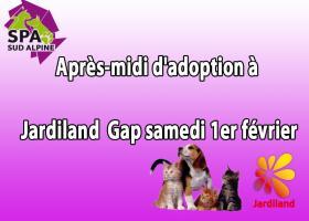 Après-midi d'adoption à Jardiland  Gap samedi 1er février