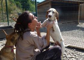 chien epagneul adoption refuge spa sud alpine chien du mois de novembre