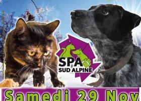 Journée adoption gap chiens  chats  spa sud alpine hautes alpes paca