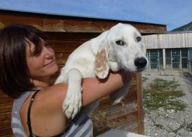 chien croisé golden adoption paca veynes gap spa sud alpine
