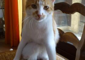 chat roux adoption spa sud alpine hautes alpes paca gap veynes