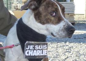 bull terrier adoption spa sud alpine gap veynes refuge paca
