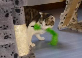 chat blesse à adopter gap hautes alpes refuge adoption chat