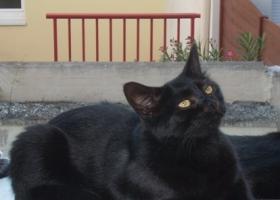 types de chatte noire