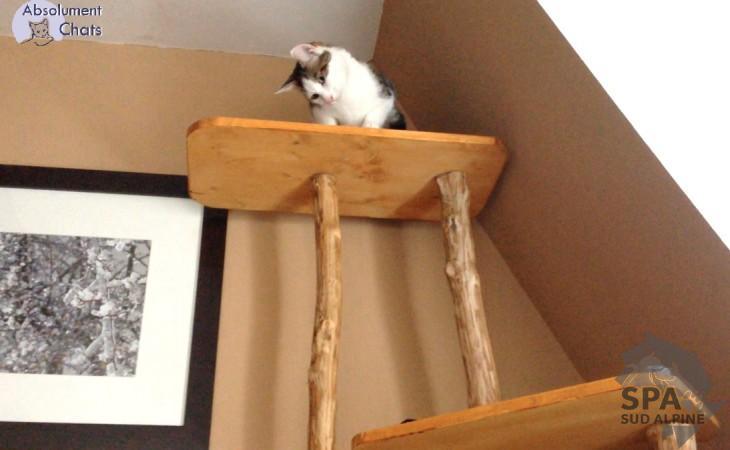 Qui peut nous faire un joli arbre chat spa hautes alpes - Arbre a chat original pas cher ...